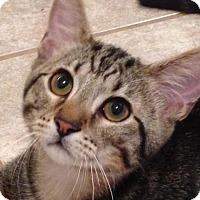 Adopt A Pet :: Tito - San Antonio, TX