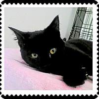 Adopt A Pet :: Hawkeye - Trevose, PA
