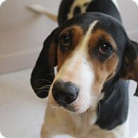Adopt A Pet :: Lacy - Trenton, NJ