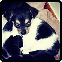 Adopt A Pet :: Donatello - Grand Bay, AL