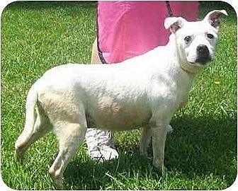 Pit Bull Terrier Dog for adoption in Smithfield, Pennsylvania - Hope in memory 12-3-10
