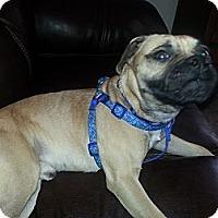 Adopt A Pet :: Truman - Austin, TX