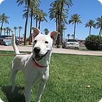 Adopt A Pet :: Skittles - Scottsdale, AZ