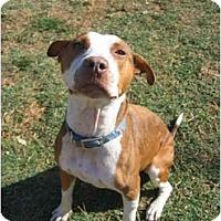 Adopt A Pet :: Samantha - Lodi, CA