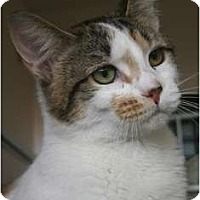 Adopt A Pet :: Savannah - Frederick, MD