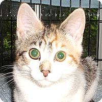 Adopt A Pet :: Diane-Dee - Colmar, PA