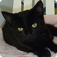 Adopt A Pet :: Risa - Hamburg, NY