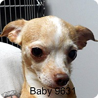 Adopt A Pet :: Baby - baltimore, MD