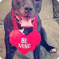 Adopt A Pet :: ADOPTED!!!! - Smithtown, NY