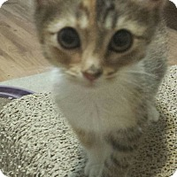 Adopt A Pet :: Jelly Bean - Chandler, AZ