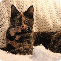 Adopt A Pet :: Shelly - Fredericksburg, VA
