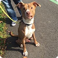 Adopt A Pet :: Bob - Medina, OH