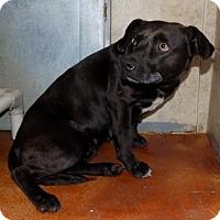Adopt A Pet :: Rachel - Terrell, TX