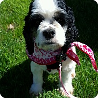 Adopt A Pet :: Hope-Adoption Pending - Sacramento, CA