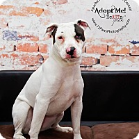 Adopt A Pet :: Molly - Apache Junction, AZ