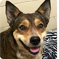 Adopt A Pet :: Lacey - Springdale, AR