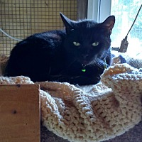 Adopt A Pet :: Shadow - Benton, PA
