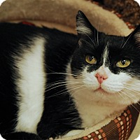 Adopt A Pet :: Catalina - Winchendon, MA