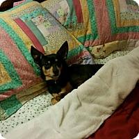 Adopt A Pet :: MP4 Schroeder - Winfield, PA