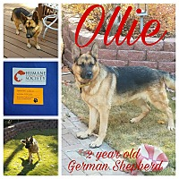 Adopt A Pet :: Ollie (Guest) - Roswell, GA