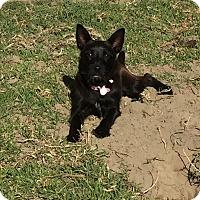 Adopt A Pet :: Zesta - Los Angeles, CA