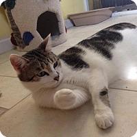 Adopt A Pet :: Angel - Port Richey, FL