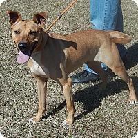 Adopt A Pet :: Max - Newport, NC
