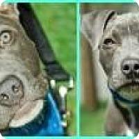 Adopt A Pet :: Roman - Shavertown, PA