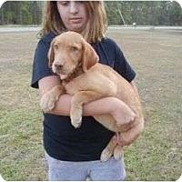 Adopt A Pet :: Aramis - Cumming, GA