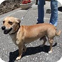 Adopt A Pet :: Sheldon URGENT - Brattleboro, VT