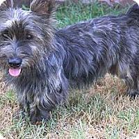 Adopt A Pet :: *Murdoch - PENDING - Westport, CT