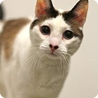Adopt A Pet :: Dusti - Sacramento, CA