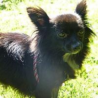 Adopt A Pet :: Judy - Wyanet, IL
