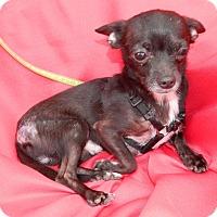 Adopt A Pet :: Diego - Umatilla, FL