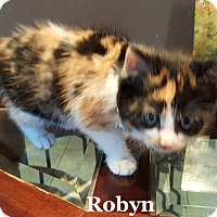 Adopt A Pet :: Robyn - Bentonville, AR