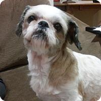 Adopt A Pet :: MOLLYpending - Eden Prairie, MN