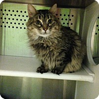 Adopt A Pet :: Olive - Oyster Bay, NY