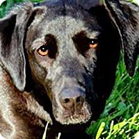 Adopt A Pet :: STELLA(A FAMILIES BEST FRIEND! - Wakefield, RI