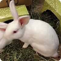 Adopt A Pet :: Tofu - Fairport, NY