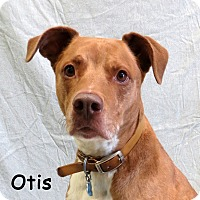 Adopt A Pet :: Otis - Warren, PA