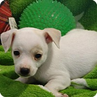 Adopt A Pet :: Snowball - Vacaville, CA