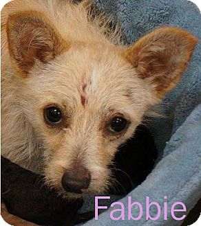 Cairn Terrier/Terrier (Unknown Type, Medium) Mix Dog for adoption in Shreveport, Louisiana - Fabbie