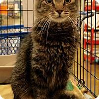 Adopt A Pet :: Gryphon - Sacramento, CA