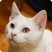 Adopt A Pet :: Angel - Medford, MA