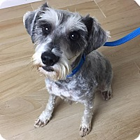 Adopt A Pet :: Holmes - Redondo Beach, CA