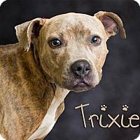 Adopt A Pet :: Trixie - Somerset, PA