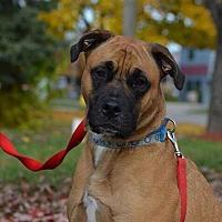 Adopt A Pet :: Dexter - Foster Needed - Detroit, MI