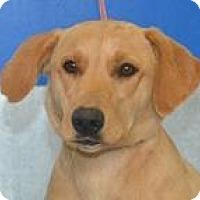 Adopt A Pet :: Harper - Columbia, SC