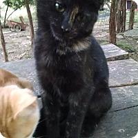 Adopt A Pet :: Nadine - Fischer, TX