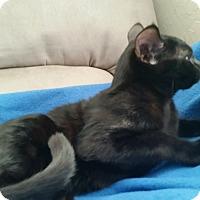 Adopt A Pet :: Velco - Englewood, FL